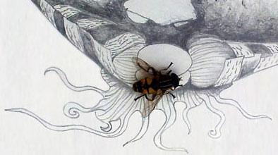gebänderte Waldschwebfliege besucht ihr Portrait